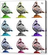 Pigeon Pop Art 5516 - Fs - Wb - M-  Modern Animal Artist James A Acrylic Print