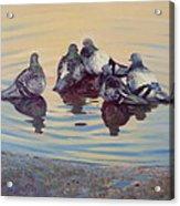 Pigeon Talk Acrylic Print