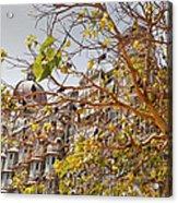 Pigeon Tree At The Taj Acrylic Print