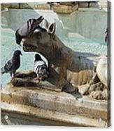 Pigeons And Fountain - Siena Acrylic Print