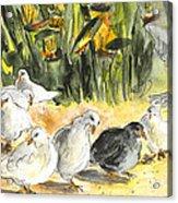 Pigeons In Benidorm Acrylic Print