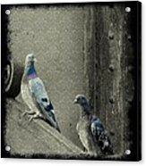 Pigeons In Damask Acrylic Print
