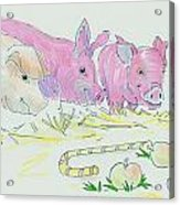 Pigs Cartoon Acrylic Print