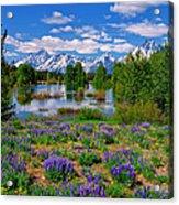 Pilgrim Creek Wildflowers Acrylic Print