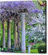 Pillars Of Wisteria Acrylic Print