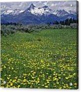 1a9210-pilot Peak And Wildflowers Acrylic Print