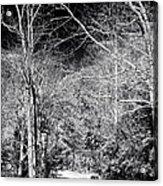 Pine Barrens Path Acrylic Print by John Rizzuto