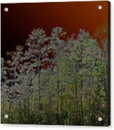 Pine Forest Acrylic Print