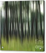Pine Forest.blurred Acrylic Print