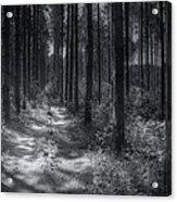 Pine Grove Acrylic Print