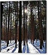 Pine Grove Vii Acrylic Print