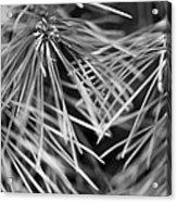 Pine Needle Abstract Acrylic Print