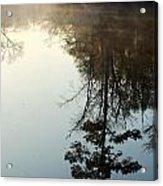 Pine Reflection Acrylic Print