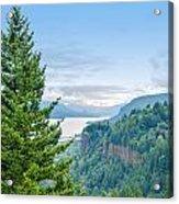 Pine Tree And Columbia River Gorge Acrylic Print