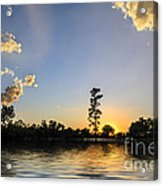 Pine Tree At Sunset Acrylic Print