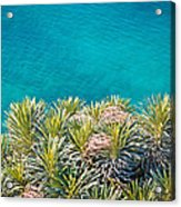 Pine Tree Branches With Turquoise Sea Background Acrylic Print