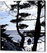 Pine Tree Silhouette Acrylic Print