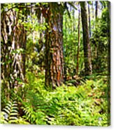Pine Trees And Ferns Acrylic Print
