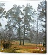 Pine Trees In Mist - Digital Paint 1 Acrylic Print