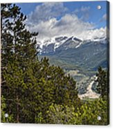 Pine Trees In The Rocky Mountain National Park Acrylic Print
