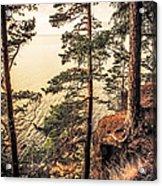 Pine Trees Of Holy Island Acrylic Print
