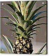 Pineapple Express Acrylic Print