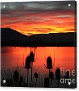 Pineview Dawn Acrylic Print