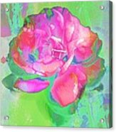Pink Abstract Acrylic Print by Cathie Tyler