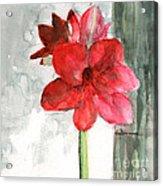 Pink Amaryllis Acrylic Print