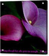Pink An Purple Calla Lilys Acrylic Print
