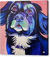 Pink And Blue Dog Acrylic Print