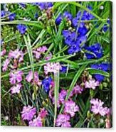 Pink And Blue Garden Acrylic Print