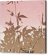 Pink And Brown Haiku Acrylic Print