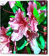Pink And Green Acrylic Print