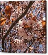 Pink And Leaves Acrylic Print