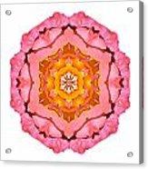 Pink And Orange Rose I Flower Mandala White Acrylic Print