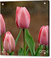 Pink And Perfect Acrylic Print