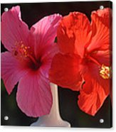 Pink And Red Hibiscus Acrylic Print