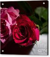 Pink And Red Rose Acrylic Print