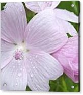 Pink And Wet Acrylic Print