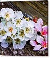 Pink And White 2 Acrylic Print