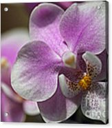 Pink And White Orchid Acrylic Print
