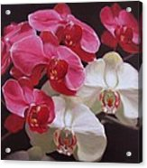Pink And White Orchids Acrylic Print