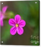 Pink And Yellow Flowers With Green Blurry Background Acrylic Print