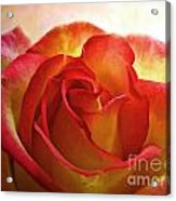 Pink And Yellow Rose - Digital Paint Acrylic Print