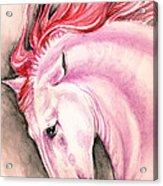 Pink Andalusian Acrylic Print