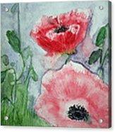 Pink Anemones Acrylic Print