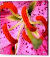 Pink Aroma  Acrylic Print
