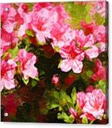 Pink Azealas Acrylic Print