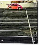 Pink Beetle Acrylic Print